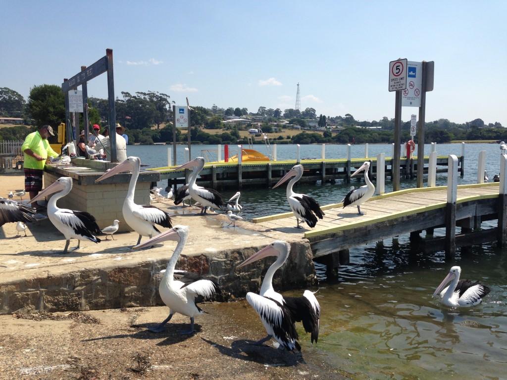 Mallacoota Wharf