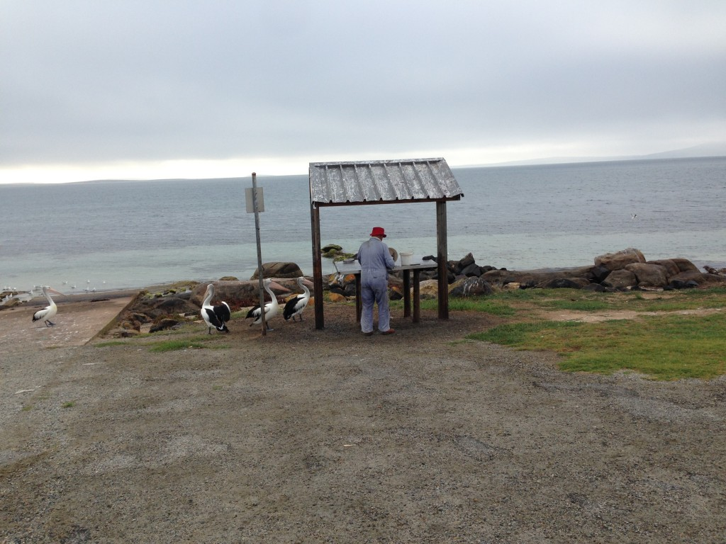 Cleaning Fish at Port Lincoln