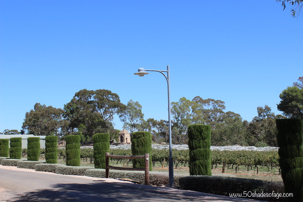 Cylcing through the Clare Valley