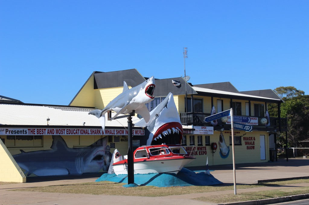 Shark Show Hervey Bay