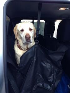 Doggie Hammock for back seat of car
