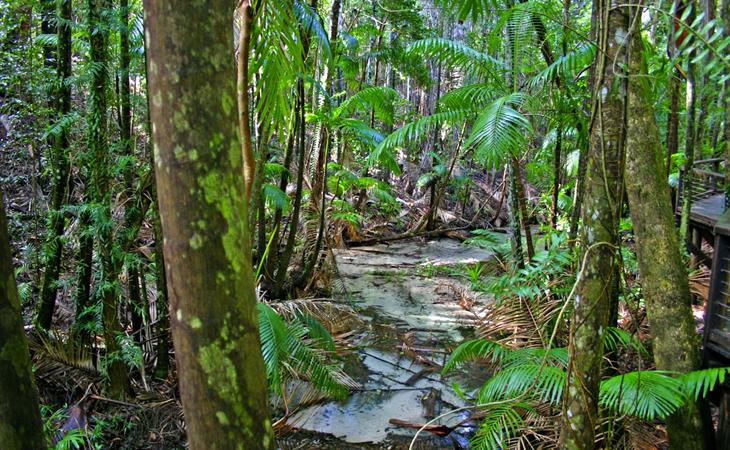 How Many Rainforests Are There On Fraser Island