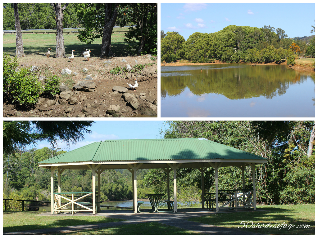 Currumbin Duck Pond