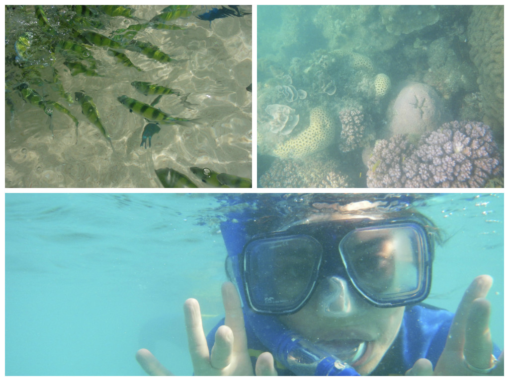 Snorkellling in The Whitsundays