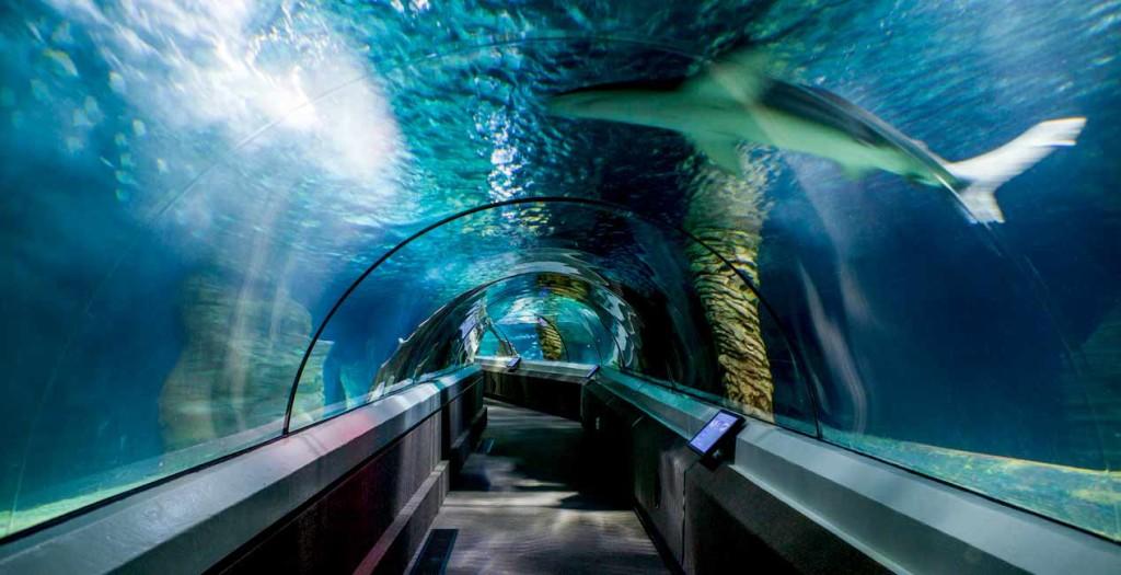 Underwater World, Mooloolaba