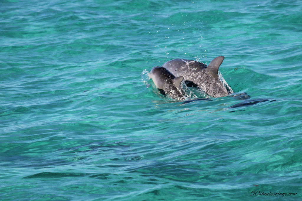 Dolphins Swim on the Ningaloo Reef