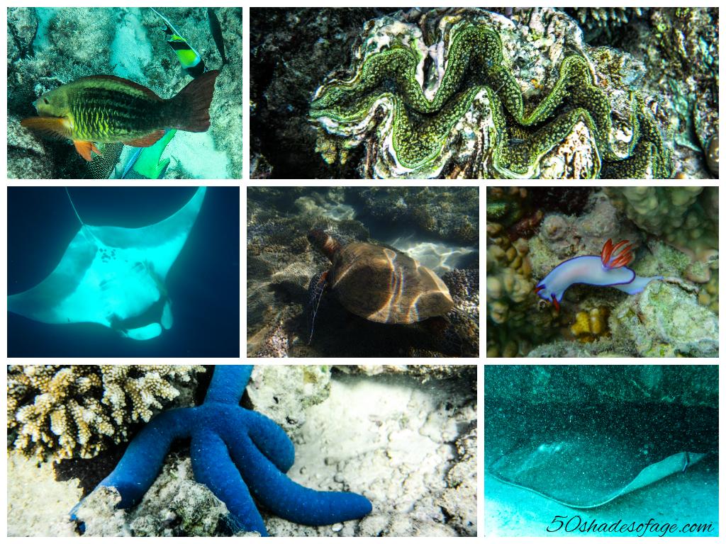Ningaloo Reef Marine Life