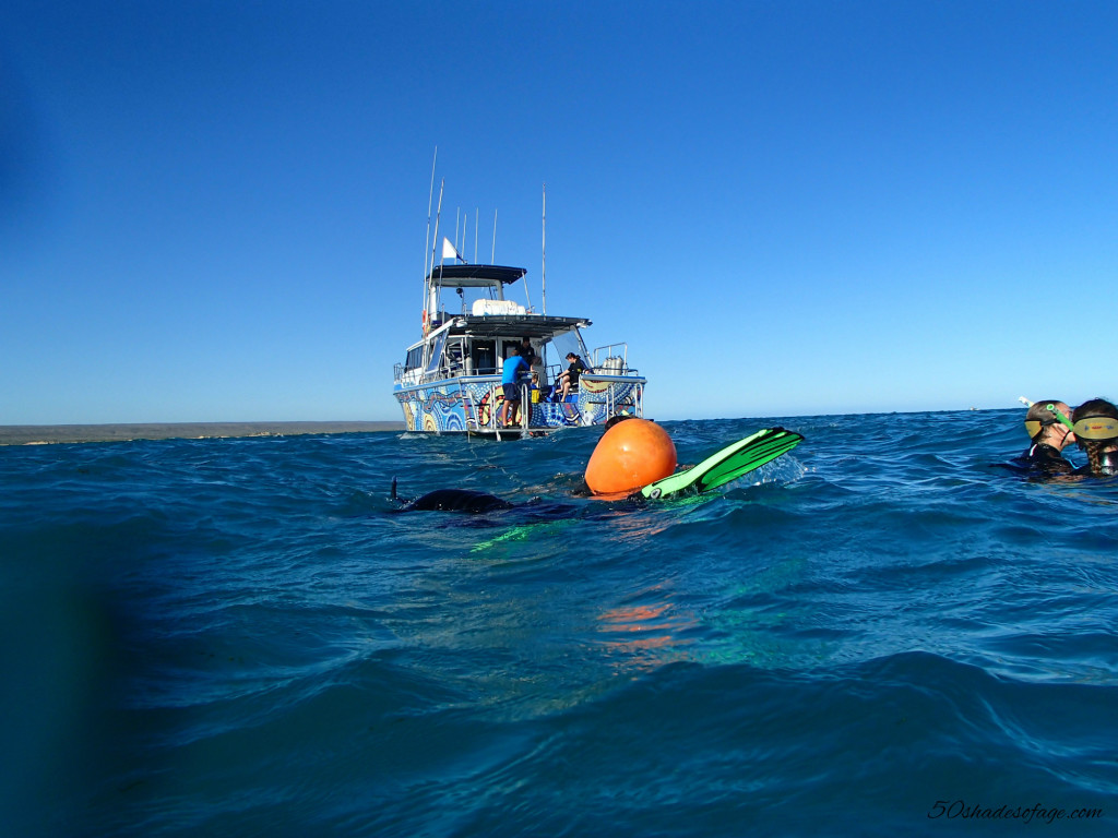Ningaloo Reef Whale Shark Swim Boat