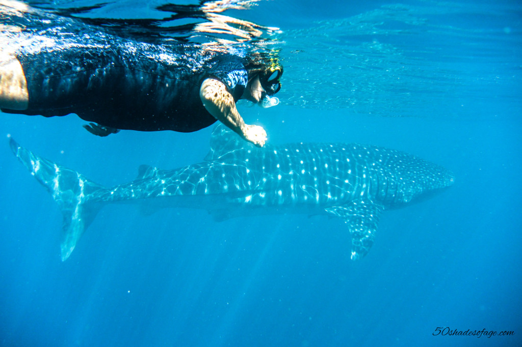 Ningaloo Reef Whale Shark Swim