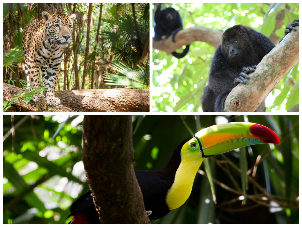 Some of the Wildlife in the Belize Jungles