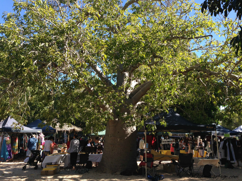 Boab at the Broome Courthouse Markets