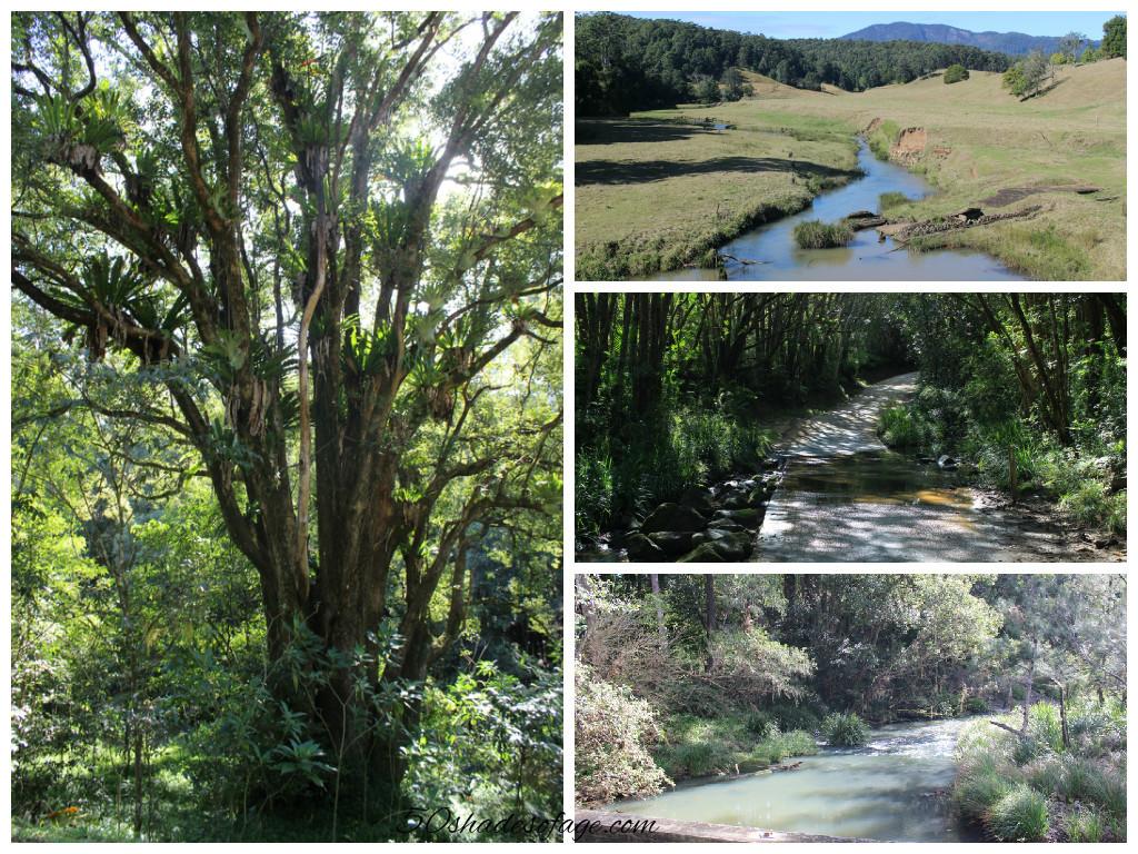 Byrill Creek & Doon Doon Creek