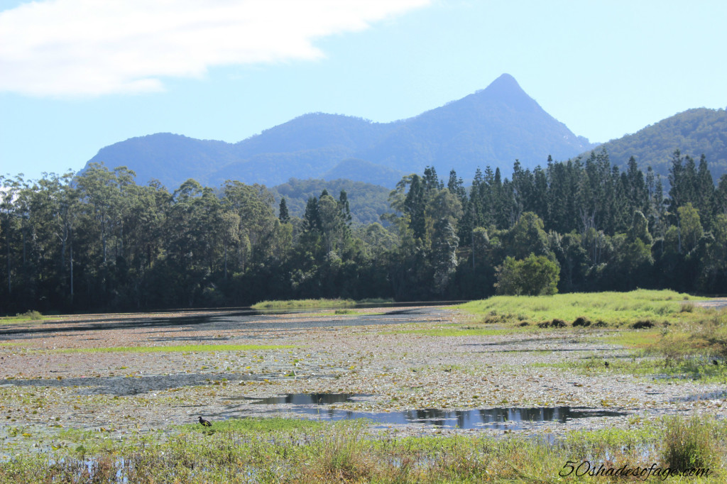 View of Mt Warning from Cram Farm