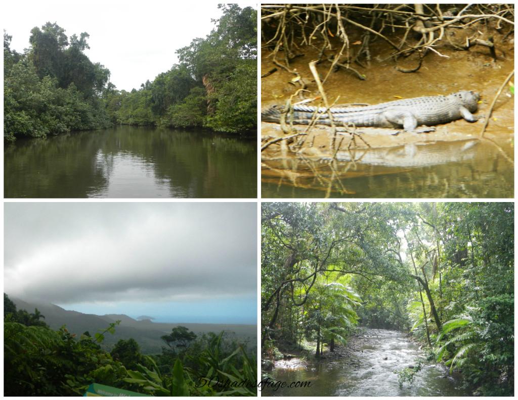 Daintree River & Rainforest