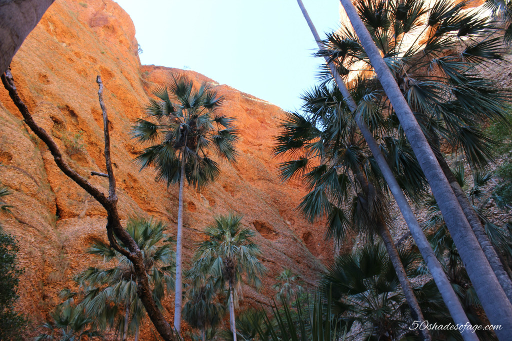 Livistona Palms lining Echidna Chasm
