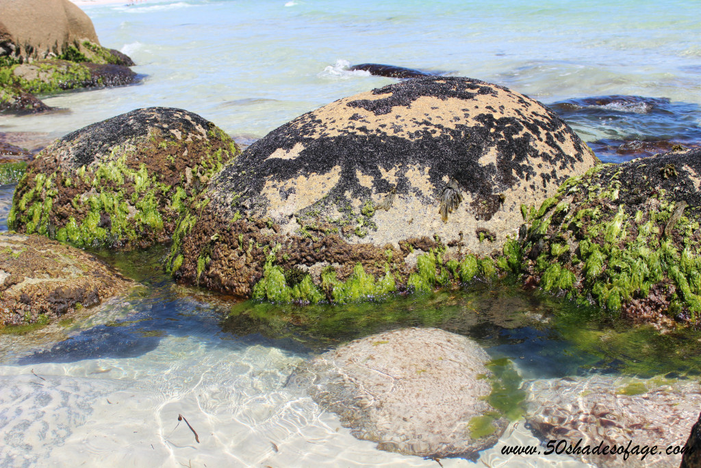 Lichen covered rocks in the clear water