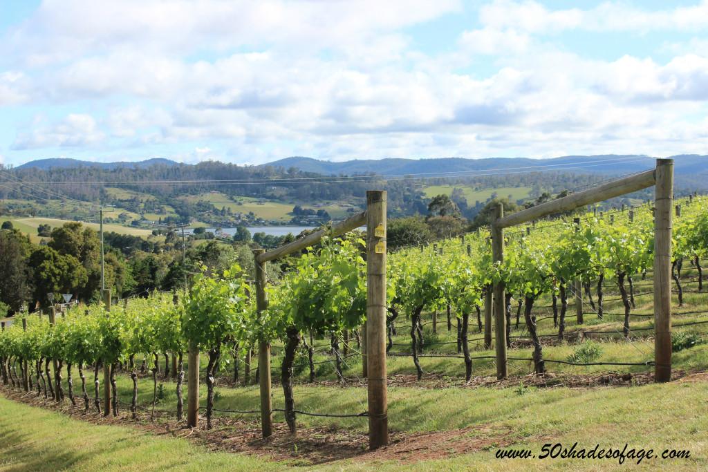Tamar Ridge Vineyard