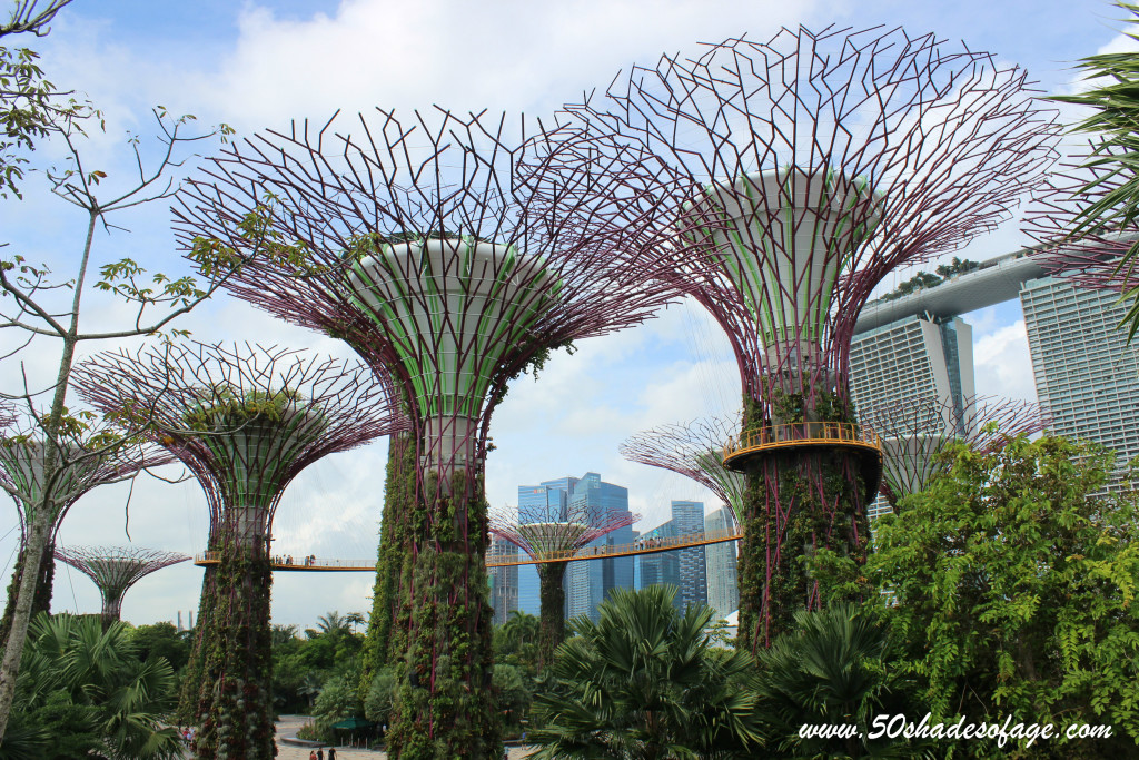 Supertree Grove at The Gardens By The Bay