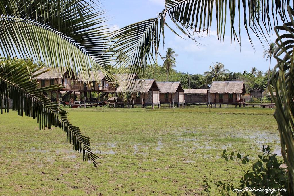 Langkawi Rice Padis