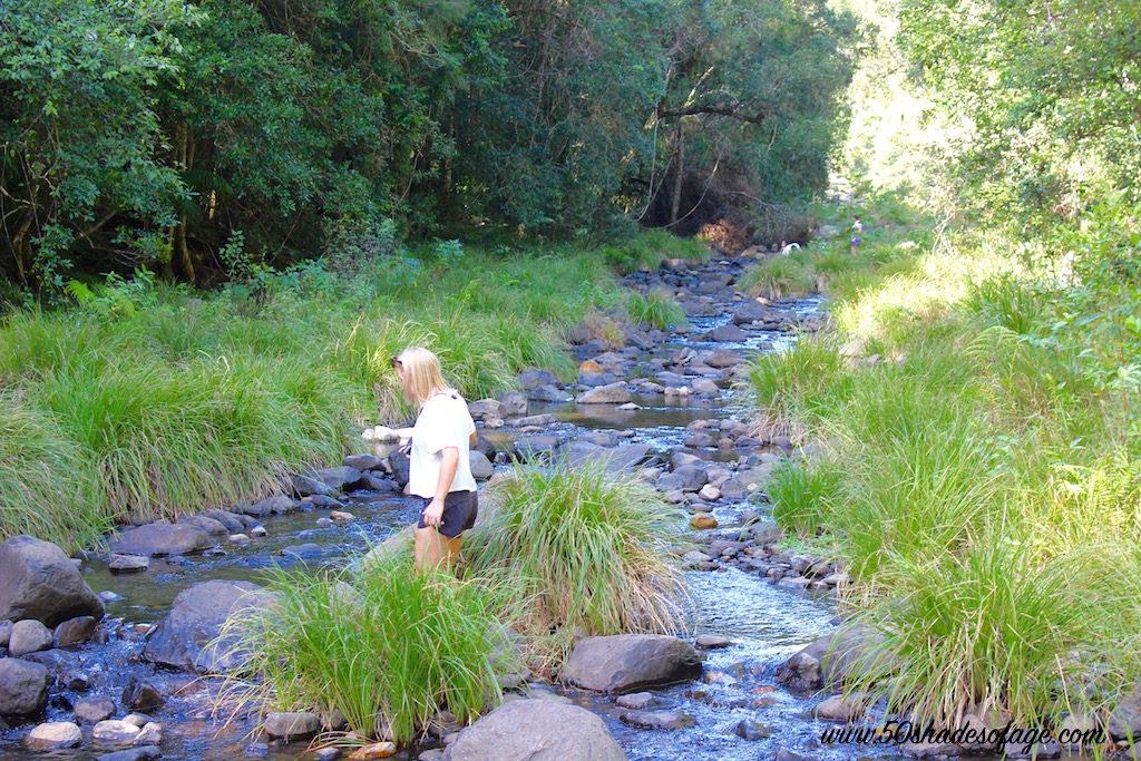 In My Backyard Killarney Glen