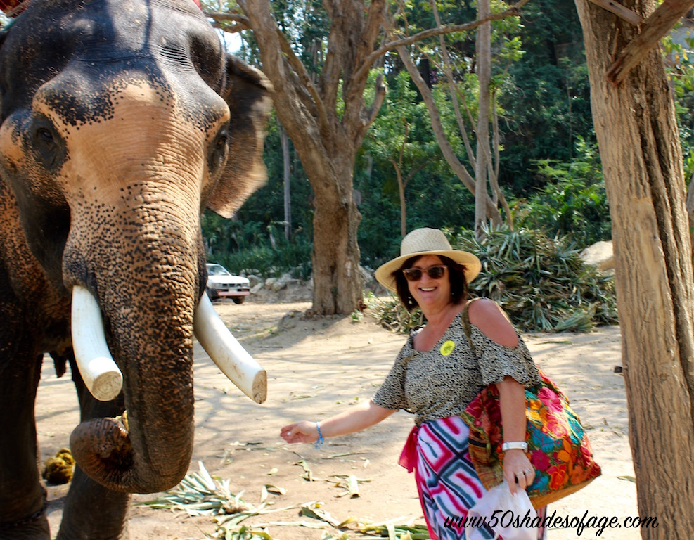 Feeding the Elephants at Sanctuary of Truth