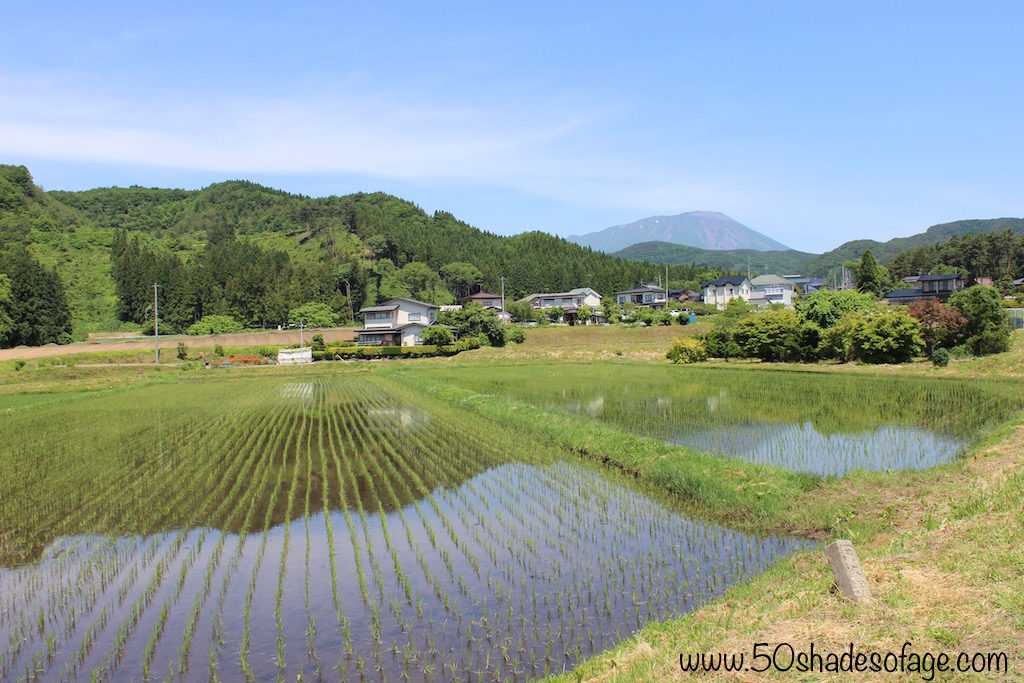 Rice Paddies and Mountain Vistas in Iwate
