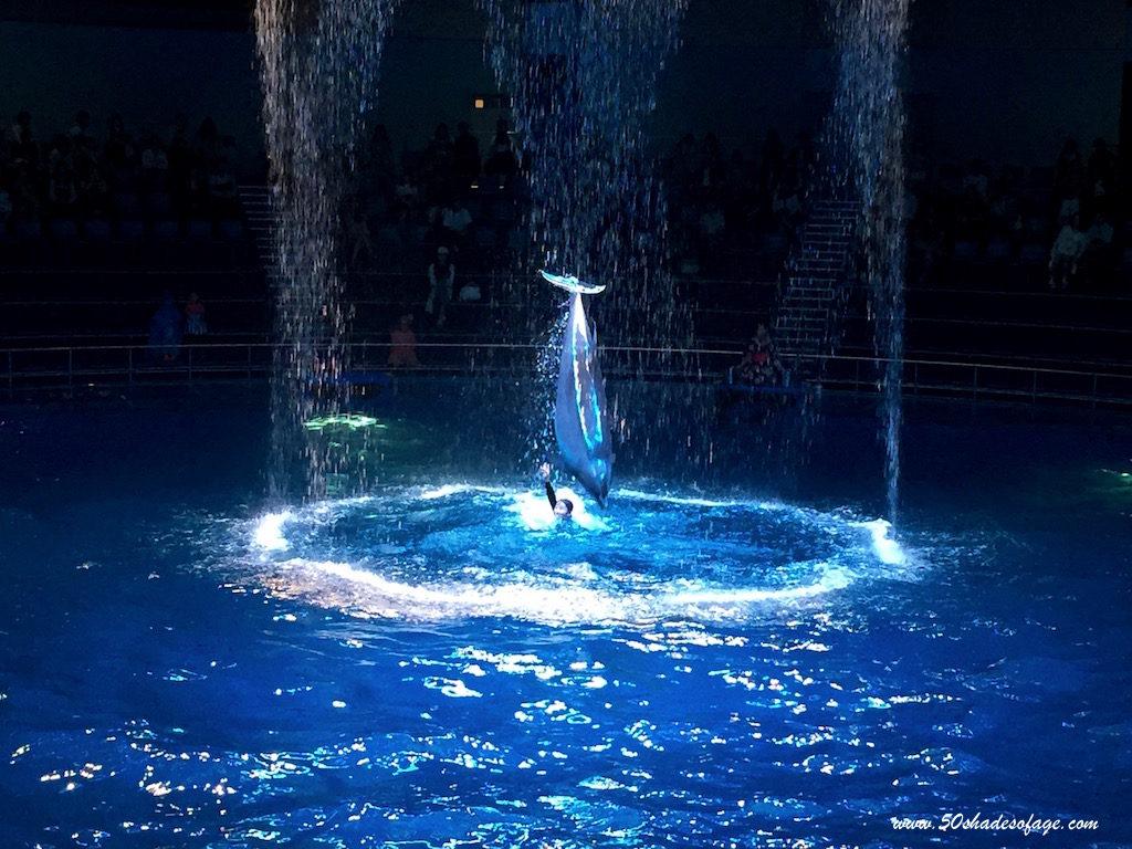 Dolphin Show at Aqua Park Shinagawa