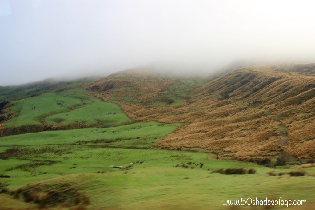 Tussock Grasslands and Green Fields