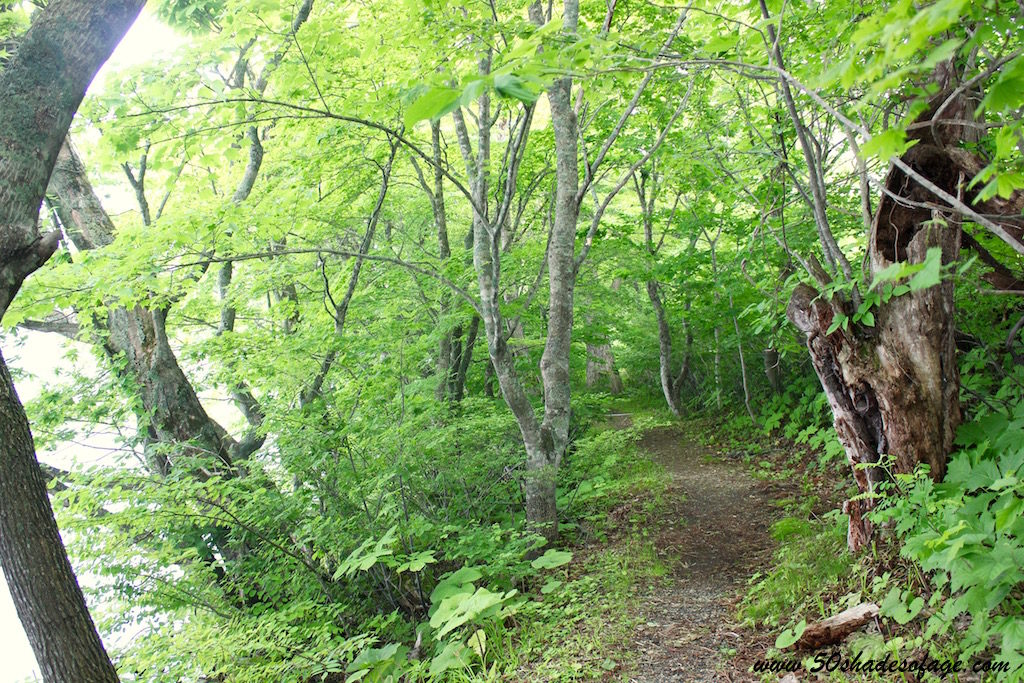 Forested Pathway around Lake Towada