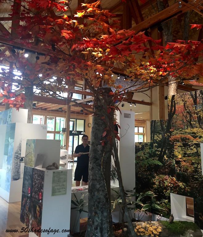 Lake Towada Visitor Centre