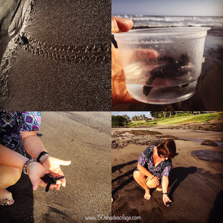 Turtle adoption and release at the Resort