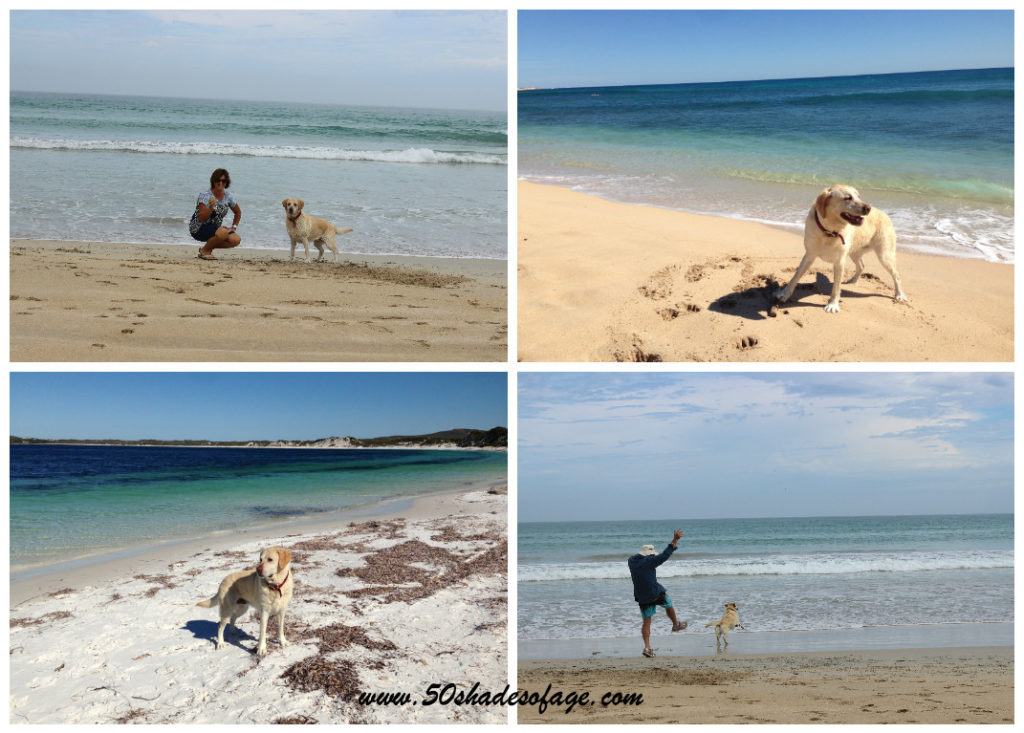 Jada running free on beaches at Robe SA, Exmouth WA & Duke of Orleans Bay, Esperance WA