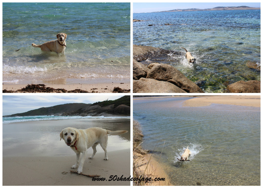 Jada swimming at Hearsons Cove, Karratha,