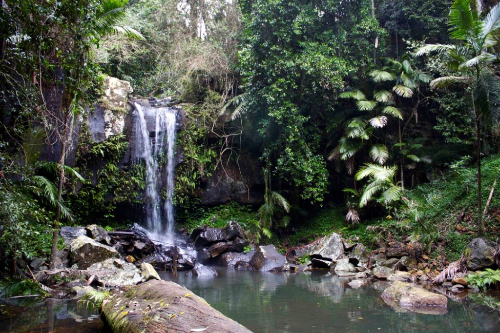 Don 39 T Go Chasing Waterfalls In The Gold Coast Hinterland