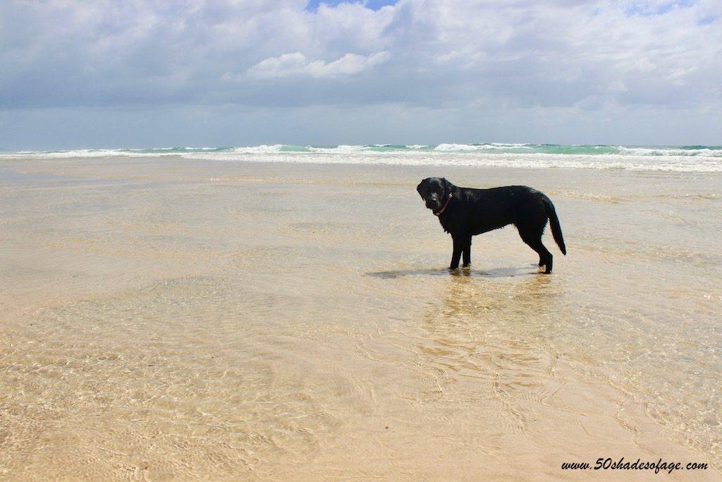 Brunswick Heads Dog Friendly Beach