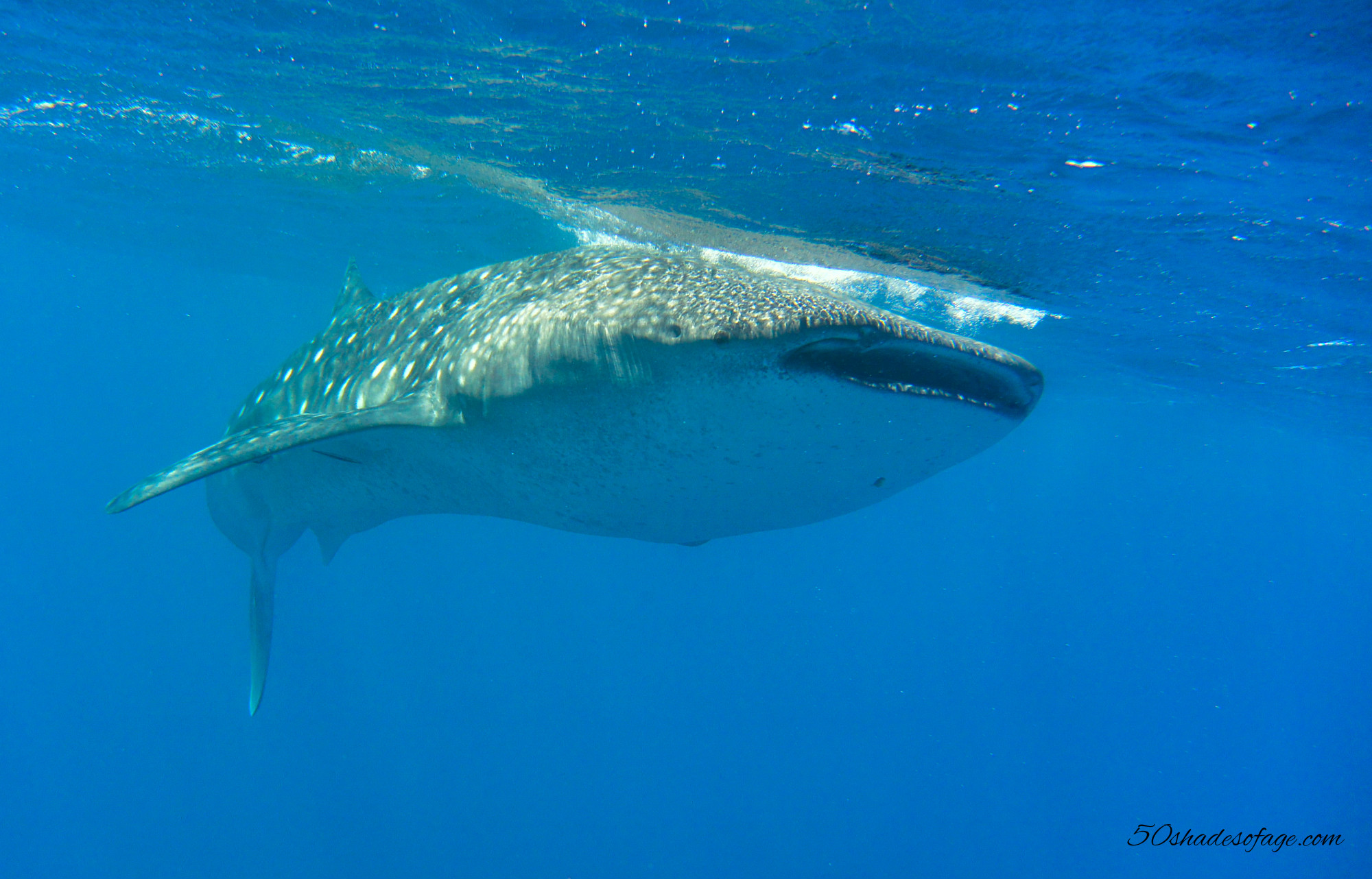 A Swim With The Gentle Giants