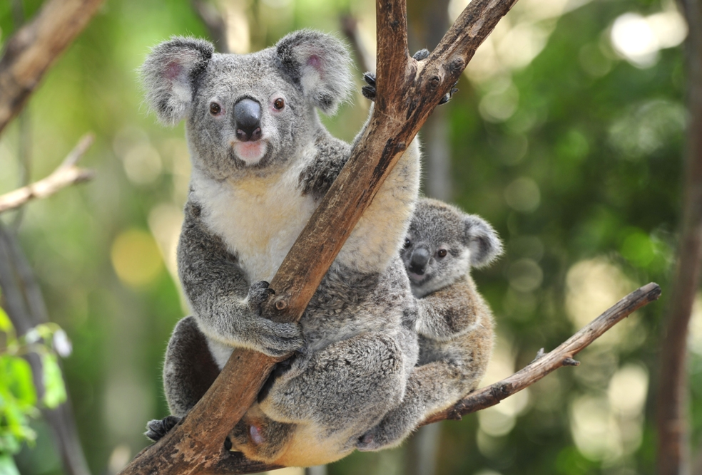 Best Places in Australia to Vacation with Kids