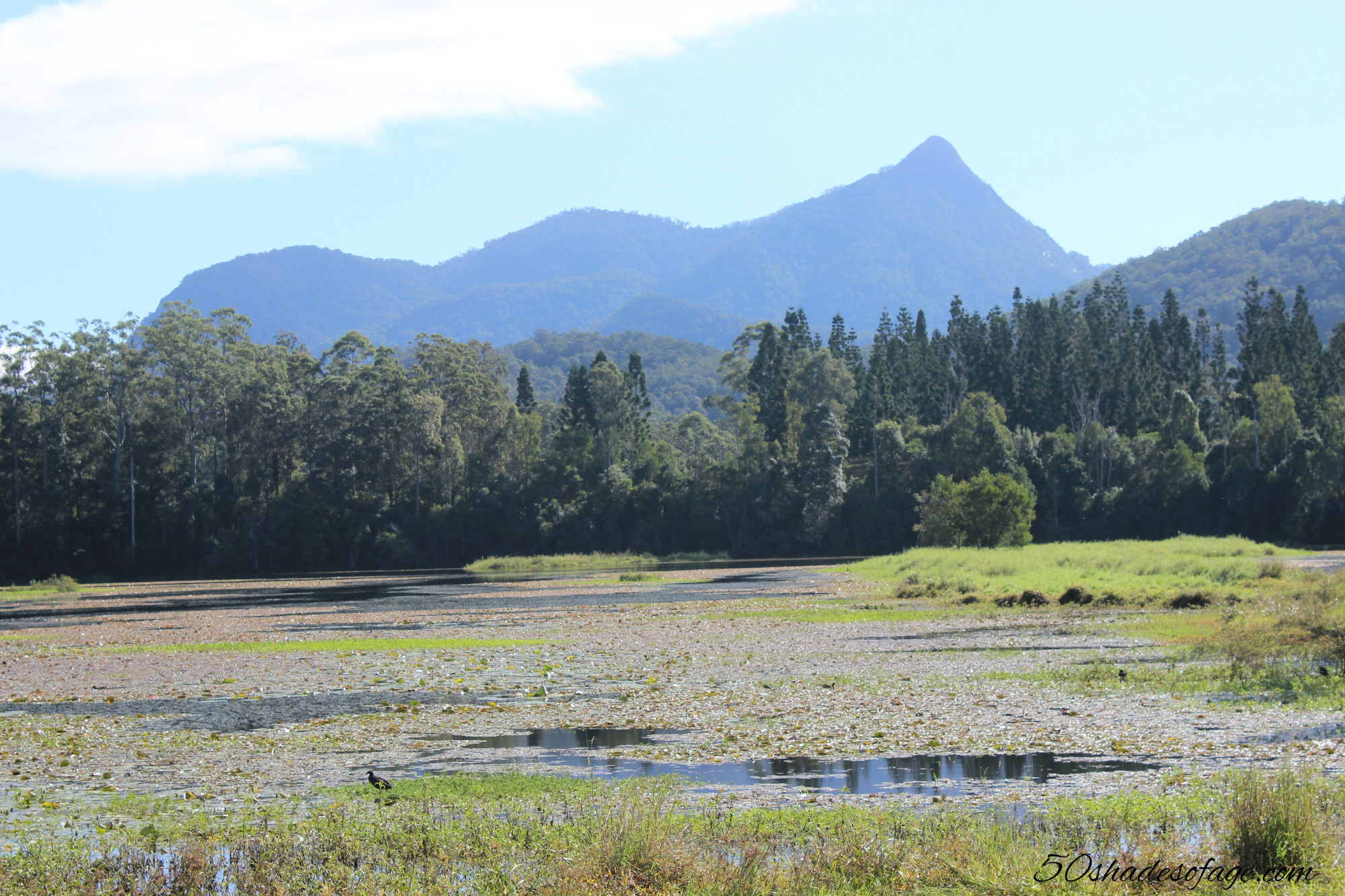 In My Backyard: Wollumbin Mt Warning Circuit