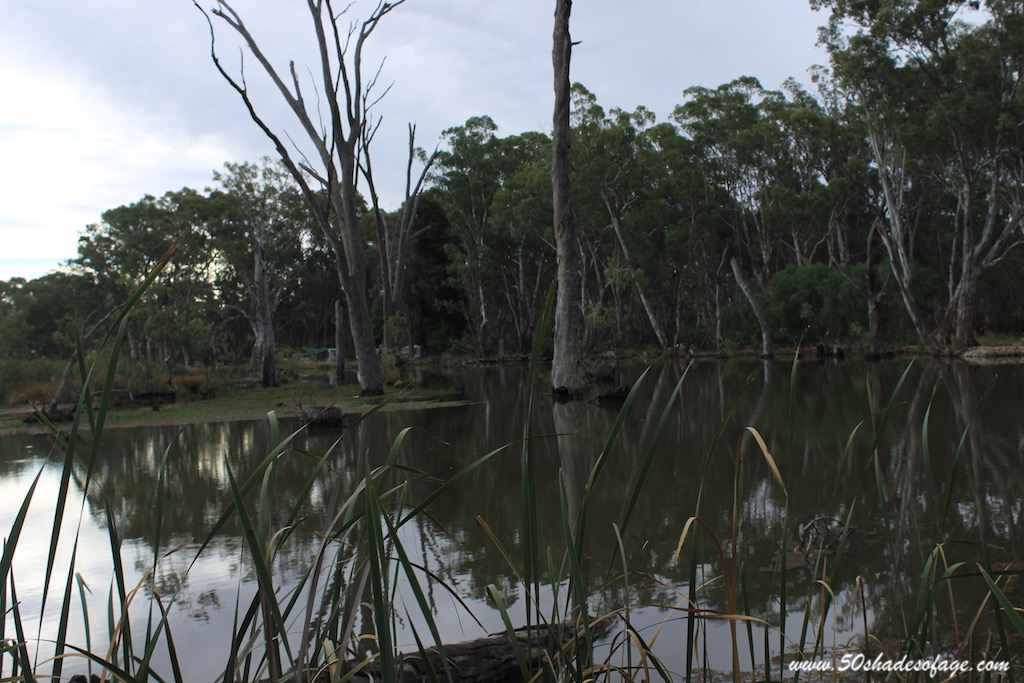 Tracing the Murray River from Echuca to Swan Hill