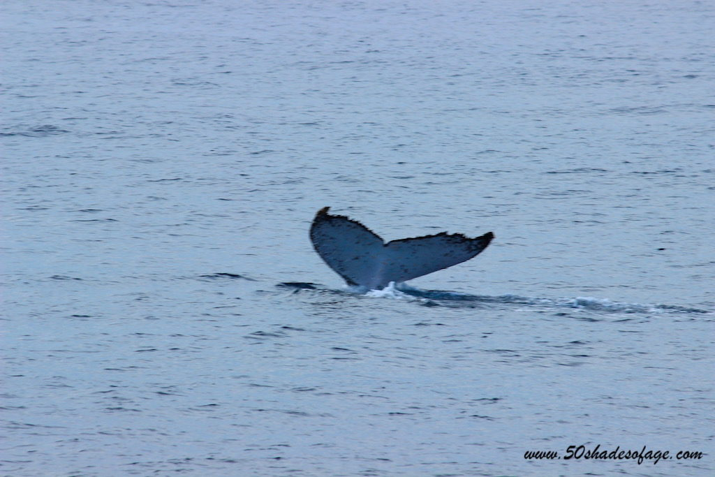 Winter Whales on the Gold Coast