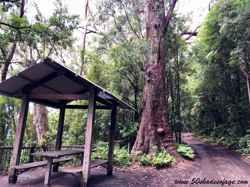 In My Backyard: Border Ranges National Park